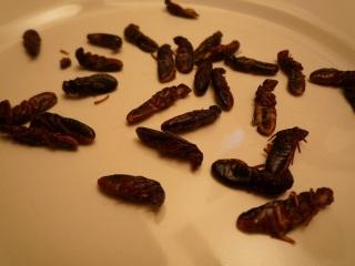 Edible termites Japan