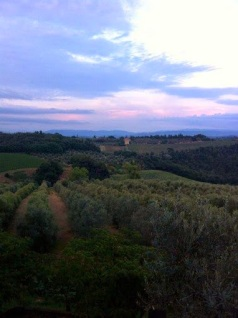 Organic vineyard Tuscany