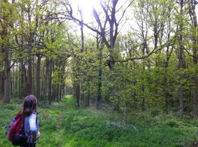 Whytham Woods Oxford