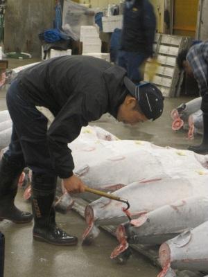 tsukiji tuna fish pick axe