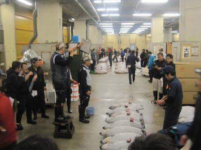 auction tsukiji market tuna fish